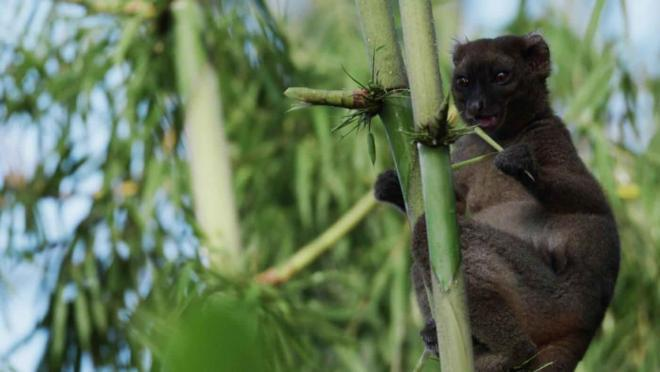 Madagaskar (Madagascar Africas Galapagos)   Belgesel