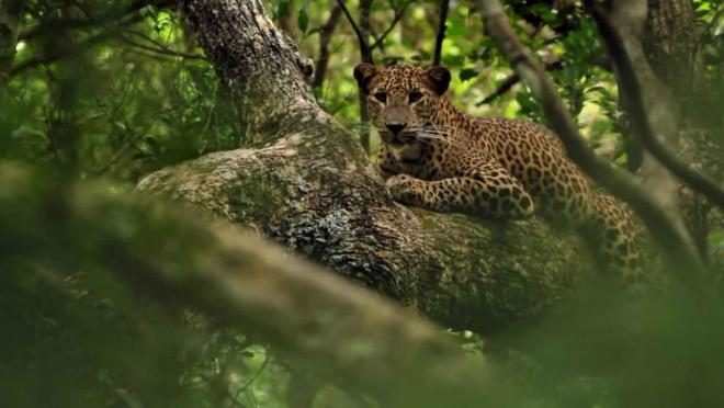 Vahşi Sri Lanka (Wild Sri Lanka)   Belgesel