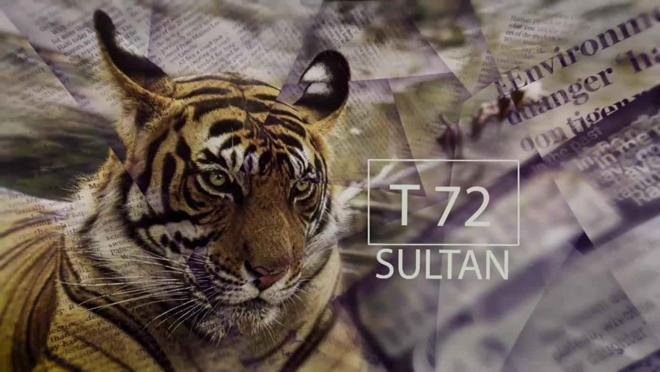 Sultan'ı Ararken (Looking For Sultan)   Belgesel